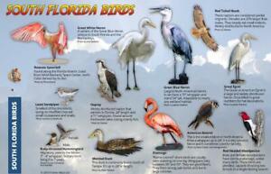 South Florida Birds Guide Card