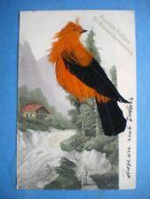 Bird Unposted Pre - 1914 Collectable Postcards