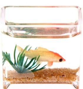 Doll House Accessories 1:12th Miniature - Fish Tank