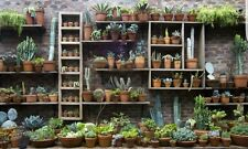 Cactus and Succulent huge selection of mixed fresh seeds! Collection starter!