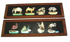 c1850 cased set of 12 hand painted magic lantern slides - 48 animals