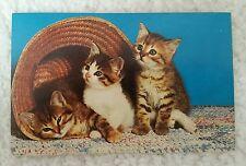 Vintage Cat Postcard Alfred Mainzer 3 Kittens & Straw Hat C16413