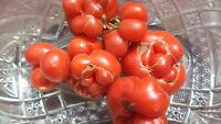 Reisetomate Tomaten Samen neue Ernte 2020 bio Anbau Nr.65