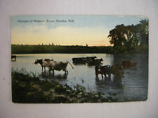 VINTAGE POSTCARD A GLIMPSE OF CATTLE IN THE MISSOURI RIVER OMAHA NEBRASKA 1917
