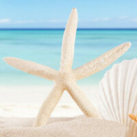 12pcs 7-11cm Beautiful Finger Starfish Beach Wedding House Crafts Decoration