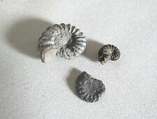 Ammoniten Fossilien 3 Stück