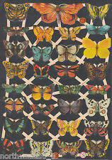 BUTTERFLIES INSECTS MOTH SPRING SMALL COLOR GERMAN PAPER CUT ART EMBOSSED