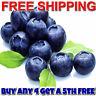 JUICY BLUEBERRIES Diffuser Fragrance Oil Refill VEGAN/CRUELTY FREE