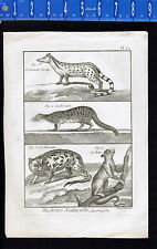 1792 Antique Print Quadrupeds Mammals Potto Genette- Muskrat