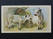 No.27 White Cattle British Mammals Grandee T30 Issued by Player 1983