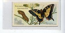 (JC9535-100)  PLAYERS,BUTTERFLIES & MOTHS,SWALLOW-TAIL BUTTERFLY,1904,#19