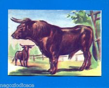 ANIMALI - Lampo 1964 - Figurina-Sticker n. 127 - TORO -New