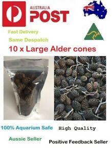 10 x Large Black Alder Cones for Dwarf Shrimp Discus Cherry Bee Shrimp