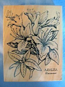Azalea Ericaceae Botanical Latin Wood-Mount Rubber Stamp K-015 PSX RARE!