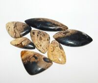 Fossil Plum Root Cabochons AAA Quality Loose Gemstone C4012 Natural Fossil Plum Root Agate Oval Shape Smooth Cabochon 40x25x6 MM Size