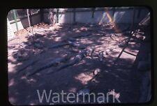photo slide 35mm amateur 1960s Crocodile Alligator  Farm  Viintage