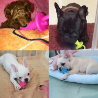 PET DOG PUPPY TOY TEETHING TOUGH CHEW TOYS BONE PACIFIERS GUM DENTAL HEALTH UK
