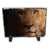 Lion Portrait Rock Slate Photo Frame - Rectangle