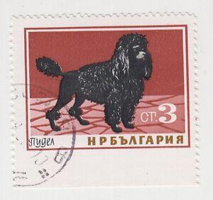 1965 FAUNA DOG POODLE Bulgaria Mi. 1464 ERROR Down IMPERF Used