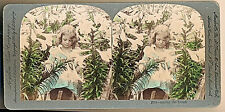 "1901 Easter ""Among the Lilies"" Keystone Tinted Stereoview, Child Easter Lilies"