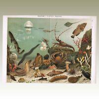 Aquarium Two Antique Chromo Lithographs from 1900