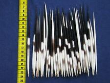 50 Stachelschwein Stacheln , Bastelware, Posen, 13 - 17 cm