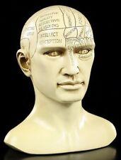 Phrenologie Kopf - Gesundheit Magie Heilkunst Dekostatue