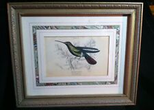 Early 1800'S William Jardine Plate Print 20/ Matted & Framed #749