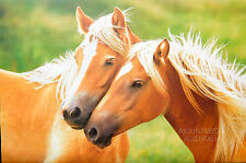 HORSE LOVE: BLONDES POSTER (61x91cm)  NEW LICENSED ART