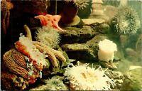 Marineland of the Pacific CA Jewel Tank Sea Anemones Postcard used (26142)
