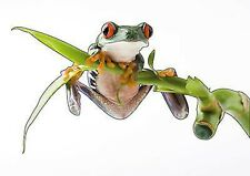 Sticker animal Grenouille 30x17cm