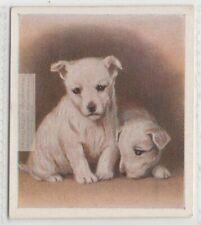 West Highland White Terrier Schnauzer Puppy Dog 80+ Y/O Trade Ad Card