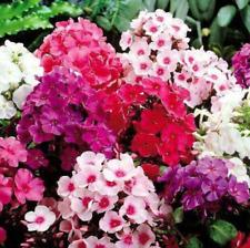 100 Pcs Phlox Flower Seeds Mix Kinds Nature Fresh Garden Home Beautiful Plants