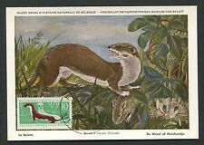 DDR MK 1962 870 FAUNA WIESEL WEASEL MAXIMUMKARTE CARTE MAXIMUM CARD MC CM d2519