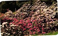 Vintage Postcard - Blooming Flowers At Highland Park Rochester NEW YORK NY #3851