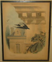 Antique 1857 EDOUARD TRAVIES 'L'Hirondelle' White Tailed SWALLOW Bird LITHOGRAPH