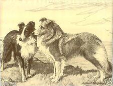 1930 Book Plate Dog Print Sketch Shetland Sheepdog Sheltie Scott Langley Nina