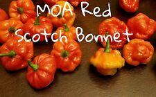 (25+) MOA Red Scotch Bonnet Pepper Seeds