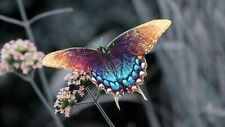 wall art decals beautiful butterfly art poster