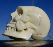 Cranio cravatta bianca, Skull da CORNO SCOLPITO Memento Mori-miracolo Camera