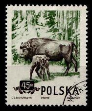 Wisente. 1W. Gest. Polen 1954