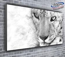 Snow Leopard Stunning Panoramic Canvas Print XXL 4 foot wide x 1.5 foot high