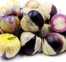 V552 Tomatillo Tiny of Coban Purple x30 seeds MEXICAN HUSK TOMATO PURPLE