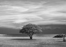 Black And White Tree Nature Landscape Wall Art Large Poster & Canvas Picture