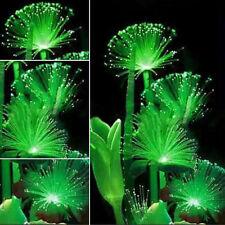 100pcs Rare Emerald Fluorescent Flower Seeds, Night Light Emitting Plants Decor