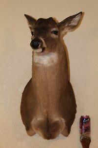 Whitetail Deer Head Shoulder Mount Taxidermy Cape Shed Antler Hunt Mule Rack