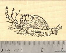 North American Beaver Rubber Stamp  K14402 WM