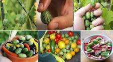 12 graines de concombre à confire / mexicain / cucamelon +12 bâtonnets d'engrais