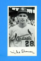 1964 ST LOUIS CARDINALS TEAM ISSUED POSTCARD MIKE SHANNON  NM