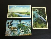 Lot of 3 Original Vintage Florida Post Cards - The Everglades, Blue Heron